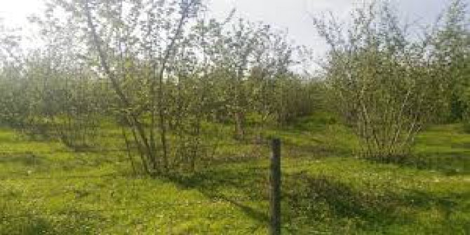 Düzce Paşaormanı Köyü