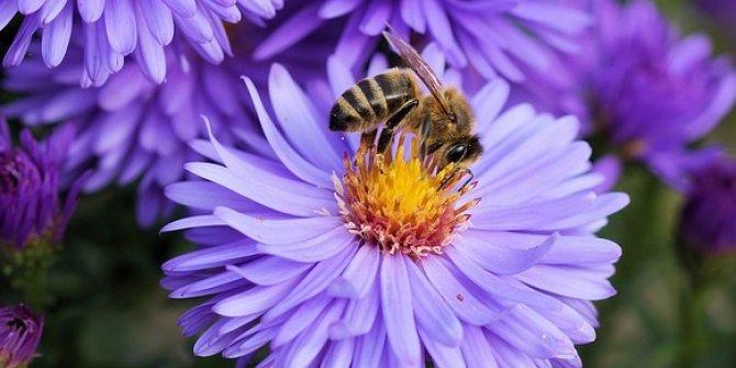 """""""Arılar Uçan Eczacı Ve Doktorlardır"""""""