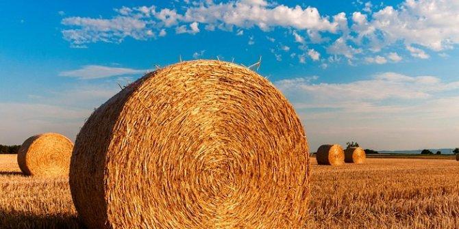 Mersin Tarımsal Üretim Değerini İkiye Katladı