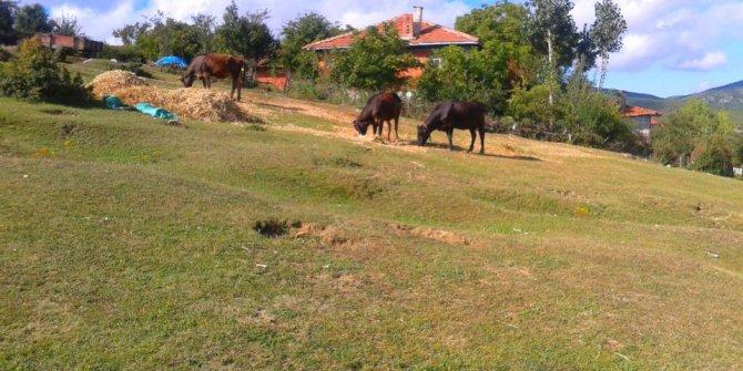 Havza Hecinli Köyü