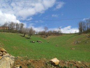 Amasya Abacı Köyü