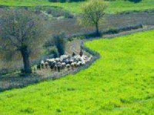 Adana Yüreğir Sağdıçlı Köyü