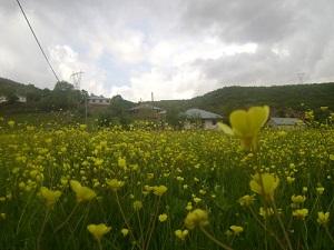 Bingöl Alıncık Köyü