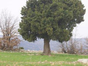 Konya Alan Köyü