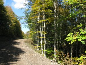 Ordu Ormancık Köyü