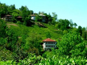 Artvin Sırtoba Köyü