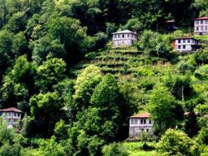 Artvin Dikyamaç Köyü