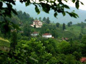 Artvin Ulaş Köyü