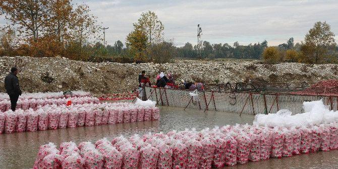 Kadirli'de Bacasız Fabrika: Turp