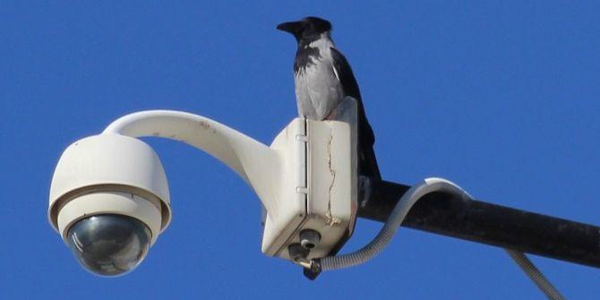 Türkiye Kuş Türü Listesine Yeni Bir Tür Eklendi