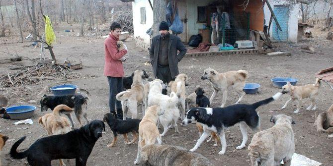 Bahçesinde 100'e Yakın Sokak Köpeğine Bakıyor