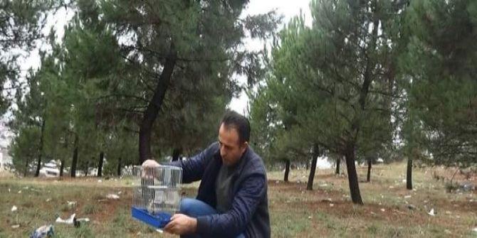 Tuzakla Yakalanan Sakalar Tabiata Bırakıldı