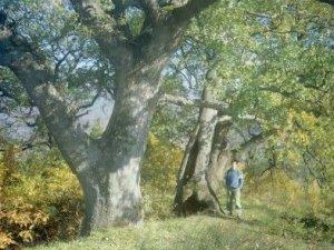 Yalova Aktoprak Köyü