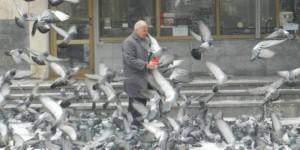 Dondurucu Soğuklarda Güvercinlere Sahip Çıktı