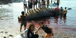 Aden'de Balıkçılar Deniz Sahiline Vurmuş Amber Balinası Buldu