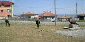 Ağrı Patnos Susuz Köyü