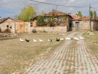 Kütahya Aloğlu Köyü