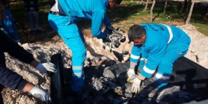 Şanlıurfa'da Kuş Ölümleri Halkı Tedirgin Ediyor