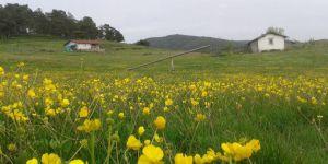 Amasya Gümüşhacıköy Alören Köyü