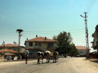 Edirne Korucu Köyü