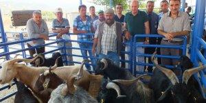Milas'ta kurbanlık satışları başladı