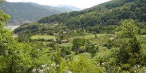 Artvin Borçka Taraklı Köyü