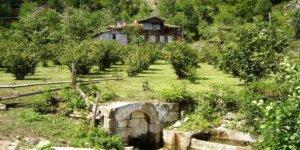Artvin Borçka Zorlu Köyü
