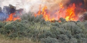 Ağrı'da 2 dönüm çalılık alan yandı