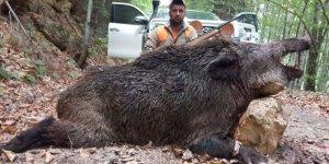 Sezonun en büyük domuzunu vurdu