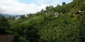 Dernekpazarı Ormancık Köyü