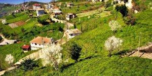 Of Güresen Köyü