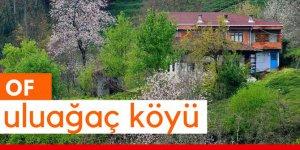 Of Uluağaç Köyü