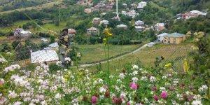 Doğanşar Yavşancık Köyü