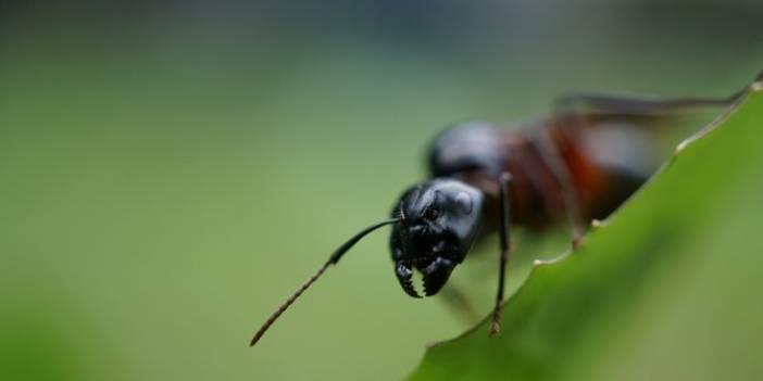 Tuz ile Karıncalardan Kurtulmak