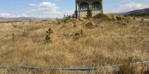 Gölova Aşağıtepecik Köyü