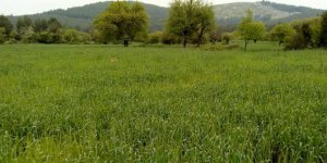 Bodrum Gökpınar Köyü