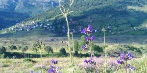 Koyulhisar Yenice Köyü