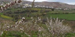 Suşehri Üzümlü Köyü