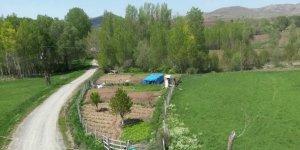 Ulaş Korubaşı Köyü