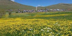 Aziziye Kabaktepe Köyü