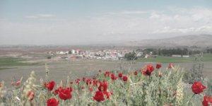 Zara Canova Köyü