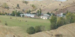 Zara Sedille Köyü