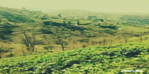 Kalkandere İncirli Köyü
