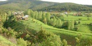 Şiran Tepedam Köyü