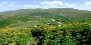 Bulancak Elmalı Köyü