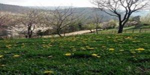 Bulancak Ezeltere Köyü