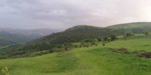 Posof Sarıdarı Köyü