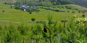 Posof Yaylaaltı Köyü