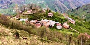 Dereli Köknarlı Köyü