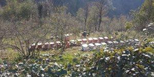 Espiye Bahçecik Köyü